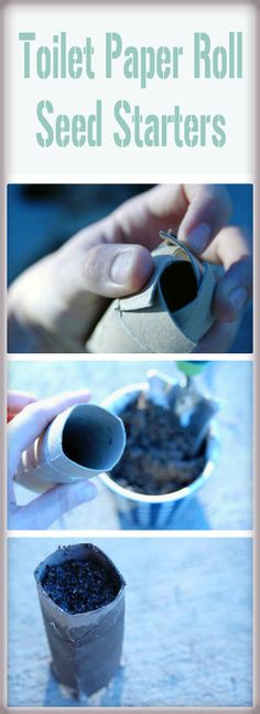 toilet paper roll seed starters on Someday I'll Learn