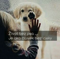❤❤❤ Animals And Pets, Cute Animals, Sad Stories, True Words, Holidays And Events, Cute Dogs, Quotations, Bff, Jokes
