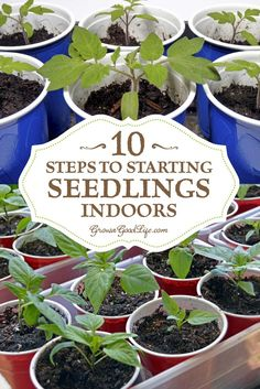 Growing your own seedlings from seed offers you more flexibly and control over your garden. You can choose your favorite varieties, grow the number of plants you need, and work within the planting dates that Gardening For Beginners, Gardening Tips, Gardening From Seeds, Container Gardening, Starting Seeds Indoors, Starting Plants From Seeds, Plant Seeds Indoors, Germinating Seeds Indoors, Growing Herbs