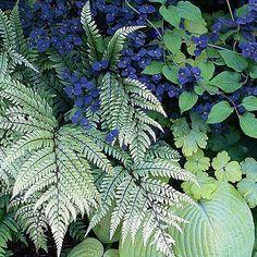 Best Silver-Leaf Plants for Your Garden Purple Petunias, Purple Plants, Types Of Blue Flowers, Purple Perennials, Perennial Geranium, Silver Plant, Short Plants, Shrub Roses, Farmhouse Landscaping