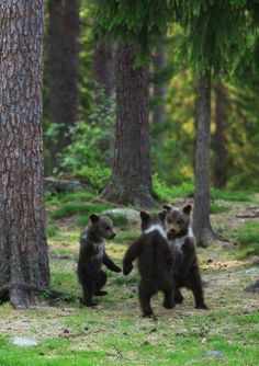 Dancing bears...am I the only one that thought of those three brothers from brave??