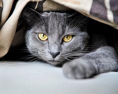 Freyja  ☆*CATS☆*