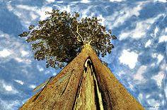 Featured Art - Mayflies on the Eucalyptus Viminalis  by Sarah  King