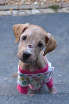 'Xena the Warrior Puppy' gets a second chance