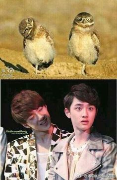 HAHAHA Sehun and Kyungsoo~ this is so perfect. This is why I love exo...