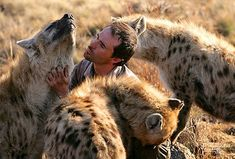 Kevin Richardson Wild dogs or hyenas, I can't distinguish