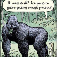 Les protéines... C'est certainement le trucdont j'entends le plus souvent parler lorsqu'il est question de monalimentation végétalienne. Ça me faire rire chaque fois car, non, chers amis, les pro...