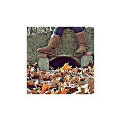 edited by krissi <3 ❤ liked on Polyvore featuring icons, pictures, fall, fall icons and backgrounds