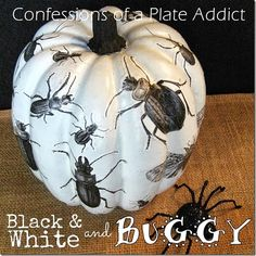 CONFESSIONS OF A PLATE ADDICT Découpage Insect Pumpkin w/ Free Insect Graphics
