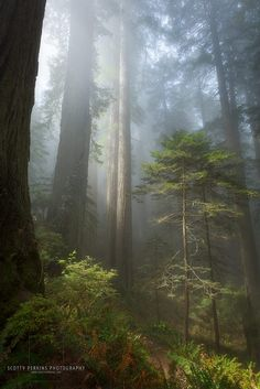 Del Norte Coast Redwood State Park, Northern California, Scotty Perkins Photography