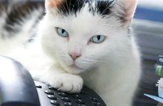 Zeke the Cat Dials 911, Causes Commotion at Sarasota Shelter - Pet360 Pet Parenting Simplified