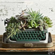 succulent garden care 13 Creative Succulent Containers From Upcycled Thrift Store amp;