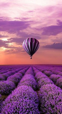 Hot air balloon over a field of lavender