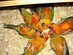 So many bellies to tickle! Parrot Toys, Parrot Bird, Funny Birds, Cute Birds, Beautiful Birds, Animals Beautiful, Types Of Species, Birds For Kids, Cute Kawaii Animals
