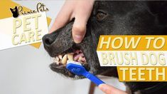Can't remember to brush your dog's teeth? Make it a habit of brushing them when you brush yours, before you know it you won't even have to think about it. Plus, the more you do it with positive reinforcement the better they will be for it!