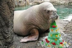 walrus cake...