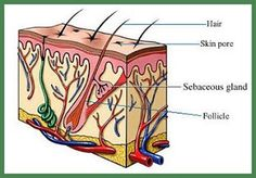 Get Rid Of Varicose Veins Clay Uses - Getting Rid of Acne Once and For All (involves both topical and internal use) Varicose Veins Causes, Varicose Vein Remedy, Bentonite Clay Mask, Calcium Bentonite Clay, Smoking Effects, Healing Clay, Natural Acne Treatment, Heart Function, Hair Vitamins