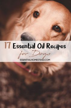 Essential Oil Recipes for Dogs 17 Essential Oil Recipes for Dogs. 17 Essential Oil Recipes for Dogs. Essential Oils For Fleas, Essential Oil Spray, Young Living Essential Oils, Essential Oil Blends, Dog Calming Essential Oils, Aromatherapy For Dogs, Aromatherapy Recipes, Easential Oils, Oils For Dogs