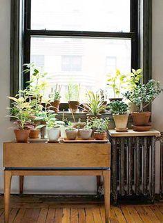 petit espace de verdure en appartement #green #plants #window