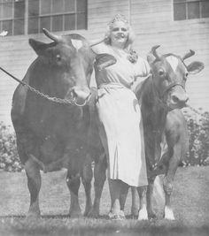 Miss Angela Ficker, Queen of the 1935 Los Angeles County Fair, poses with Adohr's Grand Champion Guernseys. Adohr Farms Collection.