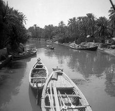 البصرة - أبو الخصيب .. فينيسيا العراق في الخمسينات ( صورة توثيقية ) Abu ALkhasib is south of Basra in Iraq called Venice of Iraq because of the water channels between date palm orchards .  1950s