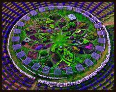 Lavender Labyrinth at Cherry Point Farm and Market, Michigan. Photograper unknown.