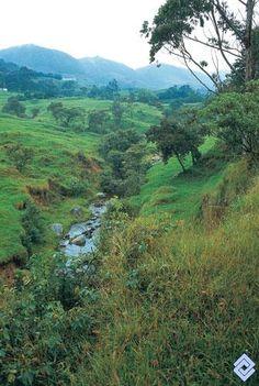 .::: Banco de Occidente :::. En buena parte, los valles en el relieve colinado han perdido la vegetación protectora de las fuentes hídricas. Mountains, Nature, Travel, Western World, Lost, Fonts, Banks, Photos, Naturaleza
