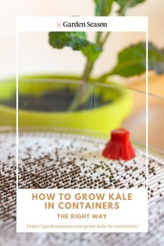 How to Grow Kale From Seeds | Although you can directly grow kale from seed in a container, I recommend starting your seeds indoors. If jiffy peat pots are not available, you can always make DIY starter pots and use biodegradable materials like paper towel rolls and eggshells. Add a good soil mix or any growing medium first in your preferred starter pot, then add 3 seeds each. The next step is to put your starter pots on a tray and wait for 5 to 7 days until the seeds germinate. Easy Vegetables To Grow, Edible Garden, Raised Garden Beds, Egg Shells, Container Gardening, Kale, Biodegradable Products, Pots, Seeds