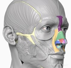 Anatomy Next Blog - First step of becoming an ENT specialist