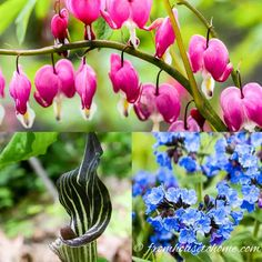 15 Beautiful Deer Resistant Shade Plants To Grow In Your Garden - Gardening @ From House To Home Blue Plants, Orchid Plants, Cool Plants, Perennial Ground Cover, Ground Cover Plants, Hydrangea Not Blooming, Blooming Plants, Deer Resistant Shade Plants, Clematis Care