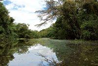 Selva inundable en cercanías de Leticia.