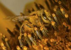Pollen addict
