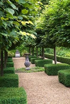 A view across clipped yew hedges into a graveled path