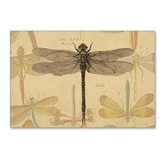 Dragonfly Vintage Postcards (Package of 8) on CafePress.com