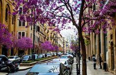 Líbano, Beirut, en primavera. imagen agradable, triste hay demasiados coches. árboles de flores de color rosa