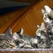 How to Stop Cats From Scratching Furniture With a Home Remedy Spray | eHow