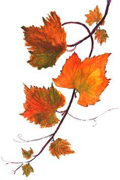 orange grapevine