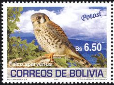 American Kestrel stamps - mainly images - gallery format