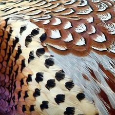 PHEASANT PLUMAGE  A bird's plumage usually weighs more than its skeleton, and the colours can are created either through pigments gained through the birds' diet, or, in the case of bright iridescent feathers, through surface refraction.  Photo by Judith Green #PATTERNITYReasearch #pattern #nature #patterninspiration #bird