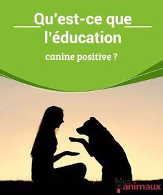 Qu'est-ce que l'éducation canine positive ?  Lorsque notre chien a un problème de comportement que nous se savons pas gérer, il nous faut l'aide d'un éducateur canin. Nombre d'entre eux se présentent comme éducateurs positifs mais tout le monde ne sait pas ce quoi ce terme désigne. C'est pourquoi nous allons tout vous dire sur l'éducation canine positive. Education Canine, Cesar Millan, Basset Hound, Cavalier King Charles, Border Collie, Animals And Pets, Dire, Labrador, I Am Awesome