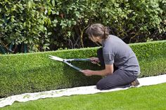 Hire our professionals for the best lawn care service in Huntsville Al. We provide reliable, consistent and affordable lawn mowing and garden maintenance in Huntsville and surrounding areas. Box Hedging, Hedging Plants, Buxus, Flowering Shrubs, Garden Hedges, Garden Fencing, Fast Growing Shrubs, Pruning Tools, Tree Pruning