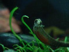Octopus, Snake, Animals, Animales, Animaux, A Snake, Animal, Calamari, Animais