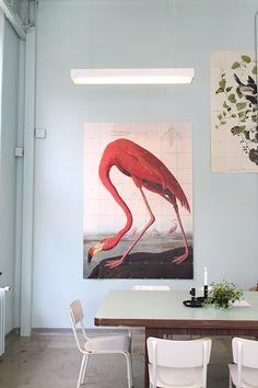 Afbeeldingsresultaat voor ixxi flamingo
