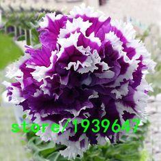 Seltene Pflanzen Petunia Samen Lila Petunia Petals Garten Heim Bonsai Balkon Blume Petunia Blumensamen 500 STÜCKE