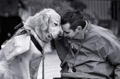 Service dog and man