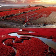 Red Beach-Panjin, China. It's algae that turns red in the fall.