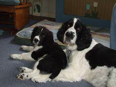 Puppy Quinn & Sunny