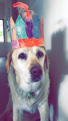 Lucky Labrador   Pawshake