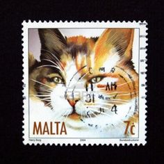 Stamp with cat from Malta