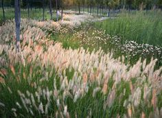 Willow woodlands,native grasses and wildflowers